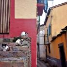1_0011_El Gasco Calle